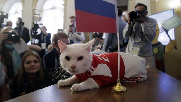 cat-mundial